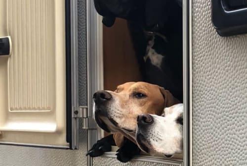 Caravan Hobby Doggy  in Hamm huren van particulier