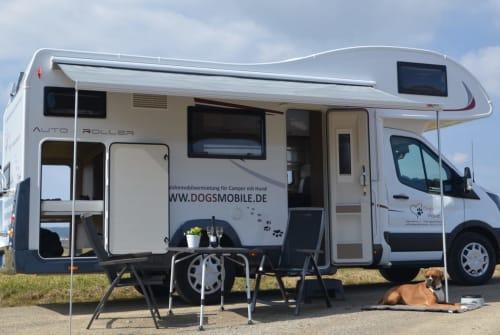 Alkoof Roller Team Dog's Mobile 275 in Nagold huren van particulier