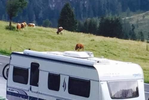 Caravan FENDT Melinda in Ursem huren van particulier